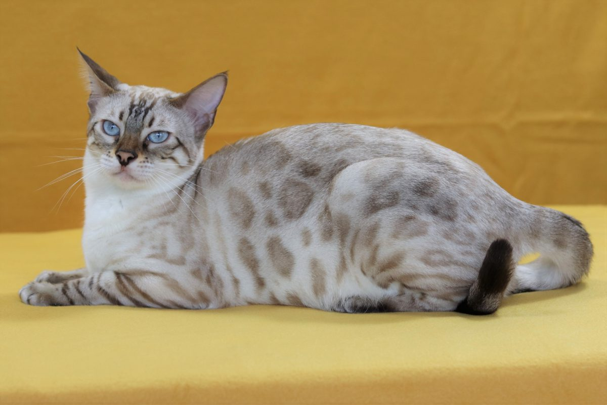 Prinzessin Dora Lee @ Leo-Landavia.de mit 10 Monaten